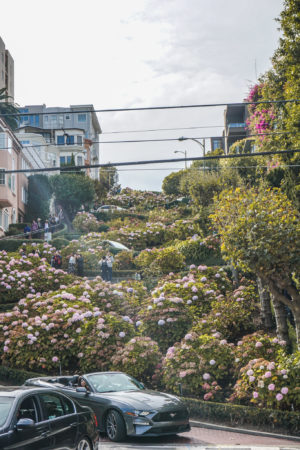 San Francisco City Guide Lombard Street